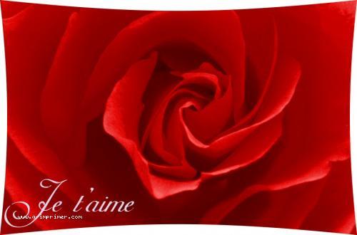 Une jolie rose rouge pour déclarer votre amour.