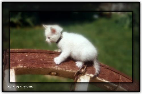 Favori Carte postale gratuite à imprimer Animaux - Choupette - A-Imprimer.com PU92