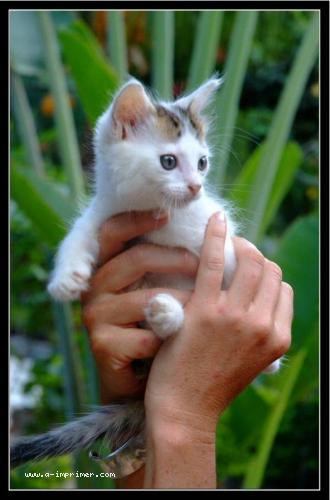 Carte postale a imprimer gratuitement animaux - Animaux a imprimer gratuit ...