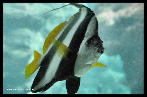 Carte postale d'un poisson.