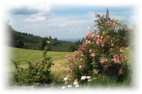 Carte postale de fleurs des champs.